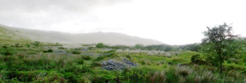 taw marsh