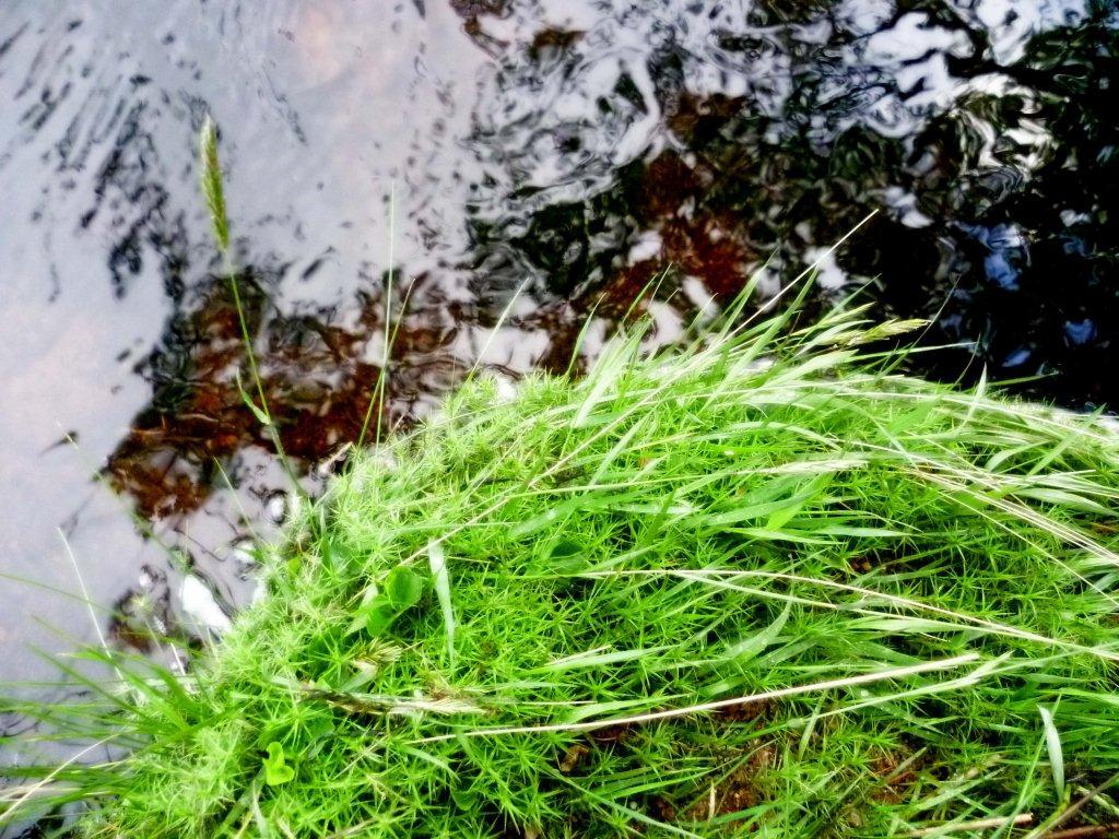 dartmoor - sphagnum, granite & water