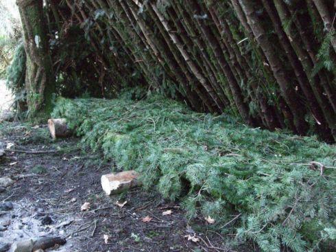 add a raised bed of soft douglas fir
