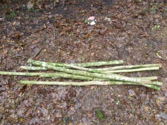 cut stake-poles to help stack the log reflector