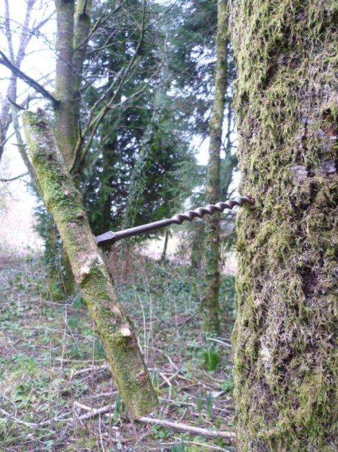 drill a 1-2 inch deep hole slightly upwards into the bark about 2-3 foot off the ground.