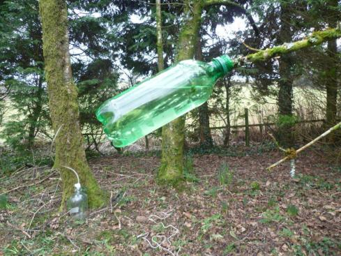cut off branch and put on bottle