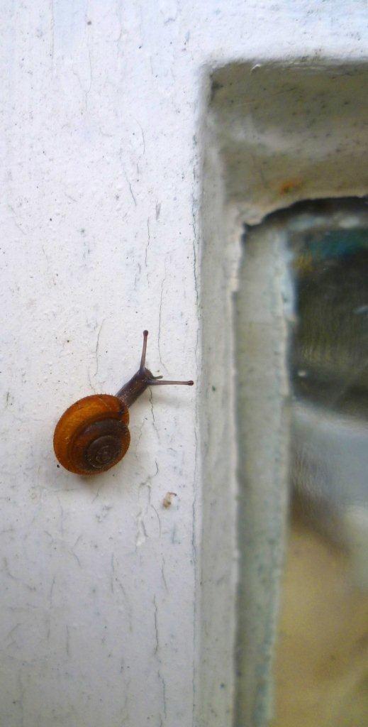 snail northface