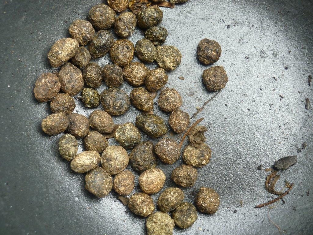 rabbit (herbivore) droppings (scat) – added to the resin it helps ...