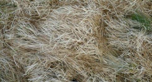 grass-southwesterly